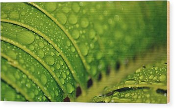 Raindrops Wood Print by Werner Lehmann
