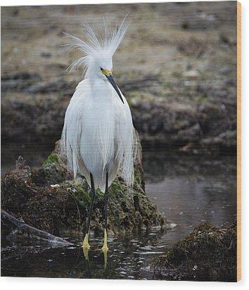 Snowy Egret Wood Print by Bill Martin