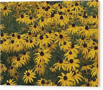 100 Susans Wood Print