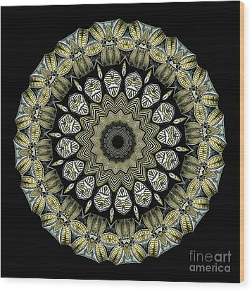 Kaleidoscope Ernst Haeckl Sea Life Series Wood Print by Amy Cicconi