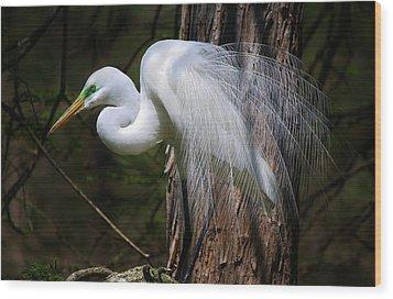Great White Egret Wood Print by Paulette Thomas