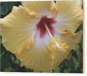 Hibiscus Wood Print by Ron Davidson