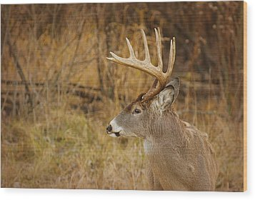 12 Point White-tail Wood Print