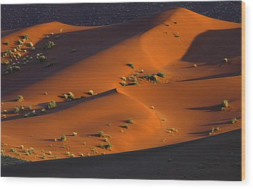 120118p071 Wood Print by Arterra Picture Library