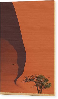 120118p072 Wood Print by Arterra Picture Library