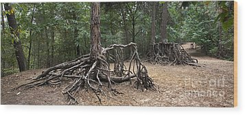 120223p257 Wood Print by Arterra Picture Library