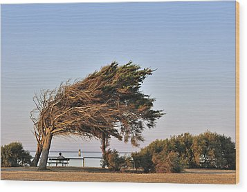 Wood Print featuring the photograph 120920p153 by Arterra Picture Library