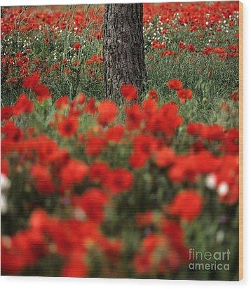 Field Of Poppies Wood Print by Bernard Jaubert