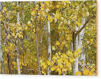 Sierra Autumn Wood Print by ELITE IMAGE photography By Chad McDermott