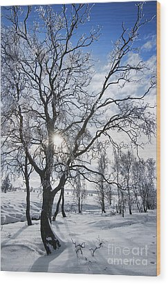 Wood Print featuring the photograph 130201p341 by Arterra Picture Library