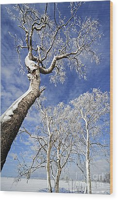 Wood Print featuring the photograph 130201p343 by Arterra Picture Library