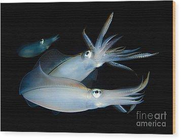 Bigfin Reef Squid Tending Eggs Wood Print by Steve Jones