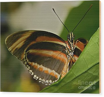 Wood Print featuring the photograph Butterfly by Olga Hamilton