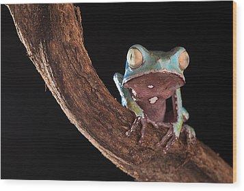 Tree Frog Wood Print by Dirk Ercken
