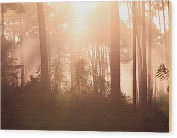 Foggy Sunrise At Long Pine Key Wood Print by Jonathan Gewirtz