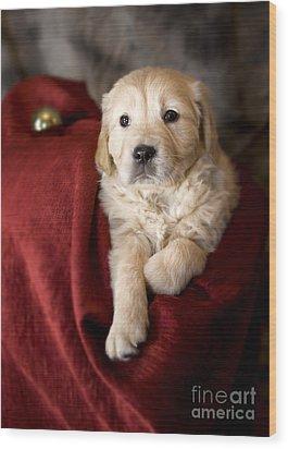 Golden Retriever Puppy Wood Print by Angel  Tarantella