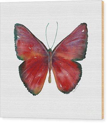 16 Mesene Rubella Butterfly Wood Print by Amy Kirkpatrick