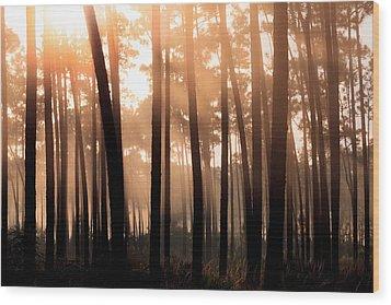 Foggy Sunrise At Long Pine Key Wood Print by Jonathan Gewirtz