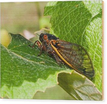 17 Year Cicada 2 Wood Print by Lara Ellis