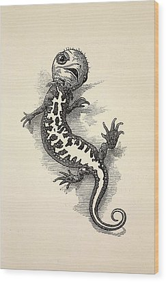 1863 Kingsley Waterbabies Human Newt Wood Print by Paul D Stewart