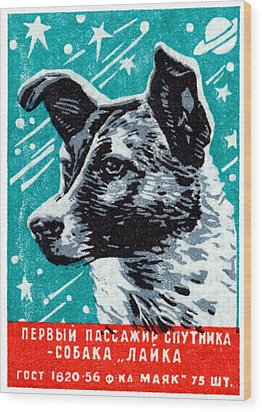 1957 Laika The Space Dog Wood Print by Historic Image