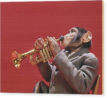1960s Chimpanzee Wearing Sport Jacket Wood Print