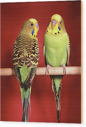 1960s Pair Of Two Yellow Green Wood Print