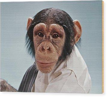 1970s Close-up Face Chimpanzee Looking Wood Print