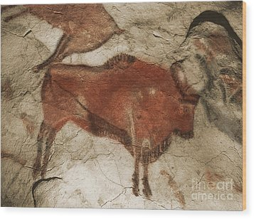 Altamira Cave Paintings Wood Print by Photo Researchers