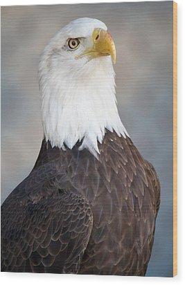 American Bald Eagle Wood Print by Paulette Thomas