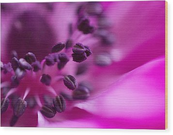 Anemone Wood Print by Cathy Donohoue