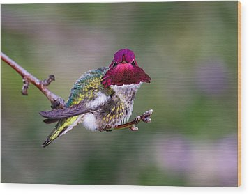 Anna's Hummingbird Wood Print by Thy Bun
