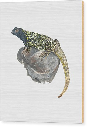 Argentine Lizard Wood Print by Cindy Hitchcock