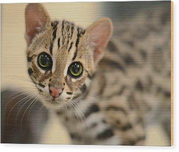 Asian Leopard Cub Wood Print by Laura Fasulo