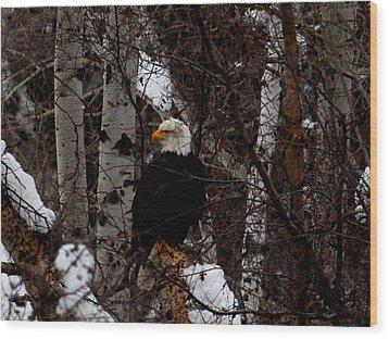 Bald Eagle Wood Print by Omaste Witkowski