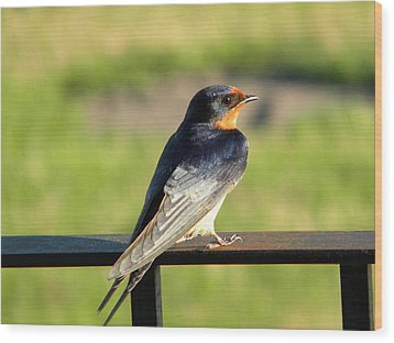 Wood Print featuring the photograph Barn Swallow by James Petersen