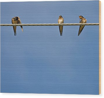Barn Swallows Wood Print by Melinda Fawver