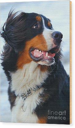 Beautiful Dog Portrait Wood Print