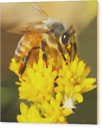Bee On A Yellow Flower Wood Print by Marian Cates
