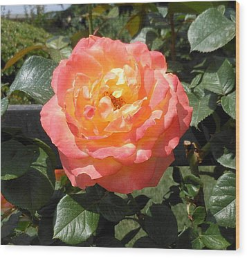 Wood Print featuring the photograph Beijing Rose  by Kay Gilley