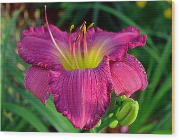 Wood Print featuring the photograph Bela Lugosi Daylily by Suzanne Stout