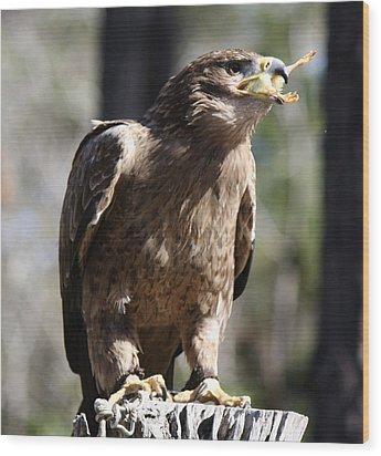 Bird Of Prey Wood Print by Paulette Thomas