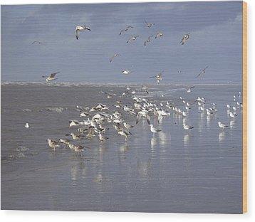 Birds At The Beach Wood Print