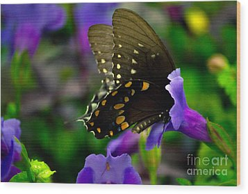Black Swallowtail Wood Print