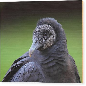 Black Vulture Portrait Wood Print