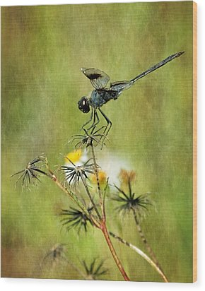 Wood Print featuring the photograph Blue Dragonfly by Dawn Currie