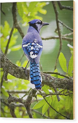Bluejay Wood Print