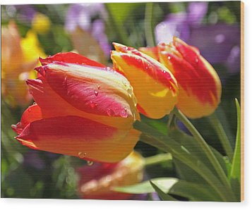 Bowing Tulips Wood Print by Rona Black