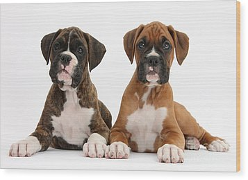 Boxer Puppies Wood Print by Mark Taylor