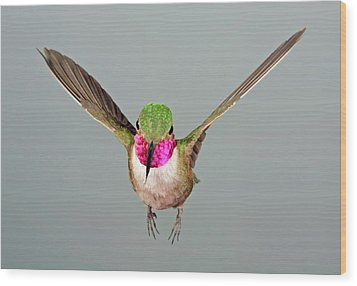Wood Print featuring the photograph Broadtail Hummingbird Visualized by Gregory Scott